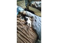 2 loveable kitten's 5 month's old looking for loving home