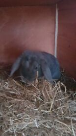 rehoming my rabbits