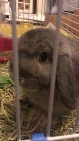 Cute rabbit for Sale