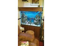 Marine tropical fish tank with external filter and lights
