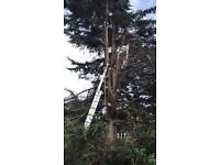 Tree cutting tree removal tree surgeon
