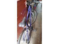 Apollo Encounter Bike