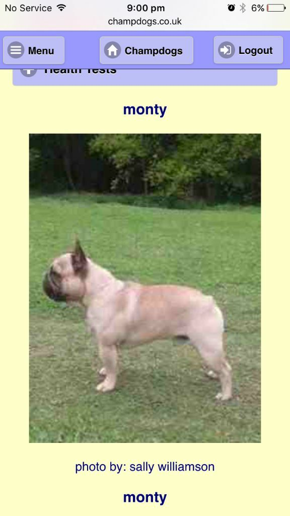 Kc Fawn French Bulldog Puppies In Dunstable Bedfordshire Gumtree