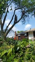 Property management/ Tree removal/ Tree pruning