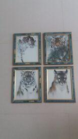 Big Cat Framed pictures - set of 4