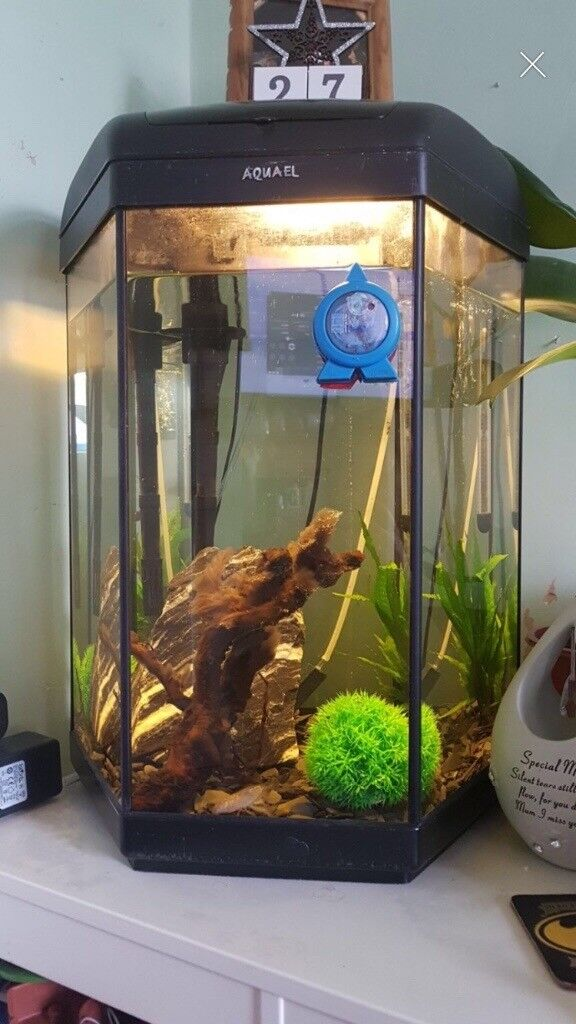 Hexagon shaped fish tank for sale | in Sheffield, South ...