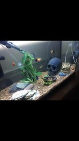 Fish tank-tropical/cold water aquarium and lots of other stuff