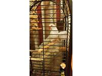 Parrot and cage