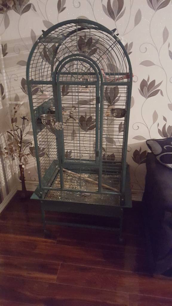 Parrot or cockateil bird cage