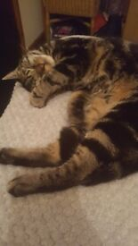 Mother cat and 6month yr old kitten in need for a home