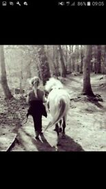 Pony share days available 2 or 3 days pw.