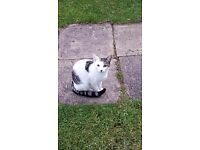 LOVELY CAT FREE TO GOOD HOME