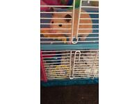Male Hamster 6 months old