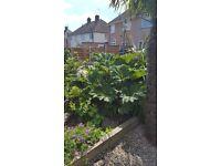 Selection of shrubs/plants(free)