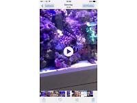 Lion fish marine
