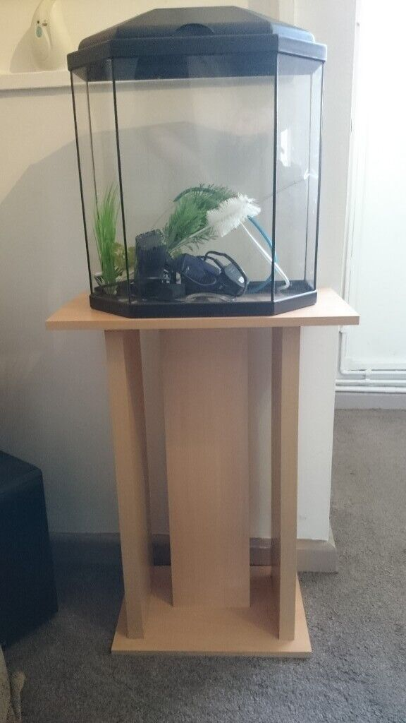 Fish Tank On Wooden Stand In Portsmouth Hampshire Gumtree