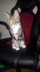 Cat bengal cashmere