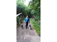 Dalmore Dog Services - dog walker - let outs - cat visits