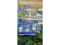 Two Budiges,Cage and food