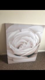 Rose canvas /picture