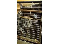 Parrots African Grey Timneh Parrot, Tamed with great personality! Comes with all certificates!
