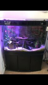 Cleair fish tank Quick sale due to house move excellent condition