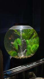Biorb 60 litres fish tank + 8 rummynose tetras, pump, heater, plants, stand & ornaments. Can deliver