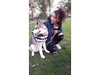 Friendly&Flexible Dog Walker/Pet sitter Wandsworth/Lambeth/Southfields/Putney
