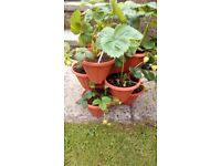 Stawberry planters