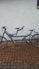 Tandem bike, barracuda