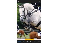 Sharer wanted for 1* Event horse Norwich