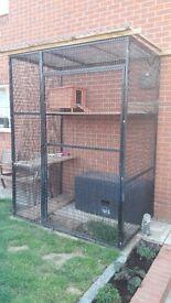 Cat Enclosure/Avairy