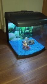 Electronic Fish Tank with Filtration System