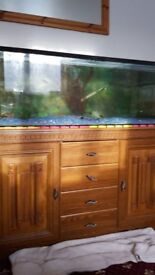 4 foot fishtank