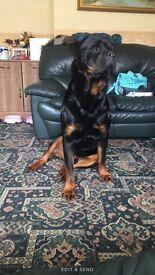 Dog walker and dog sitting
