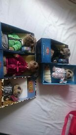 5 original meerkats