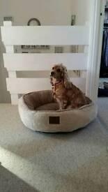 Kennel club bed