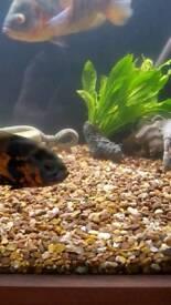 Large aquarium gravel