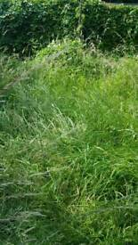 GRASS AND TREE'S CUTTING 100% GOOD WE DO ALL SOUTHEAST LONDON + KENT