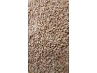 Carpet: Heritage Twist 332 Dark Beige