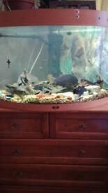 Juwel Aquarium 180£