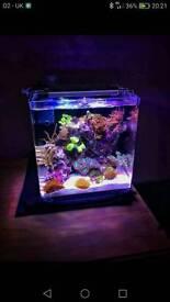 Marine Pico Reef aquarium