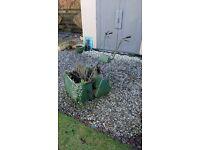 Petrol lawnmower planter - lovely garden fixture