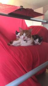 9 week approx old kittens