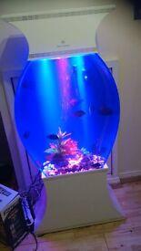 cleair aquatics fish tank