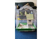 3 budgie's with cage and supplies