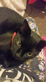 Black Cat for 50£
