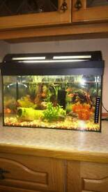 Fish tank 35 litter with accessories