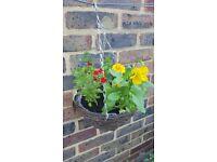 hanging baskets/plants/flowers