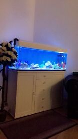 STUNNING FISH TANK AND CABINET